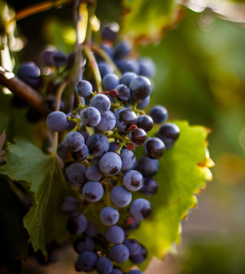 GUIDED TOURS IN NAPA AND WINE COUNTRY